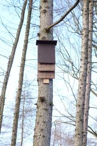 Barney  and woodland Feb 2015 010