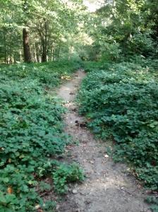 Bridleway before